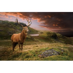 Stag Tempered Glass Wall Art Picture - 80cm x 120cm