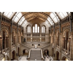 Natural History Museum Tempered Glass Wall Art - 80cm x 120cm