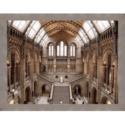 Natural History Museum Framed Wall Art - 180cm x 140cm