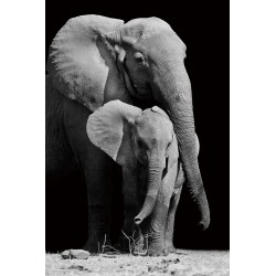 Elephant Family Tempered Glass Wall Art - 150cm x 100cm
