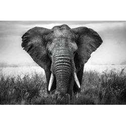 African Elephant Tempered Glass Wall Art - 120cm x 160cm