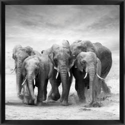 Framed Acrylic Wall Art - Elephants 80cm x 80cm