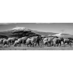 Glass Wall Art -  Herd of Elephants - 160cm x 60cm