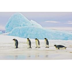 Glass Wall Art - Penguins on Arctic Ice - 120cm x 80cm