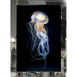 Jellyfish in Mirror Glass Frame 95cm x 75cm